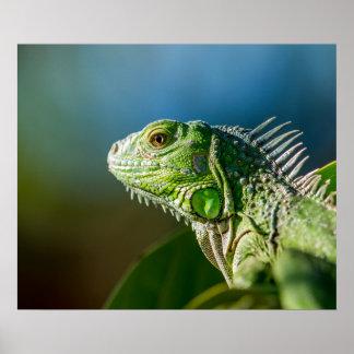 Beautiful Reptile Face Poster