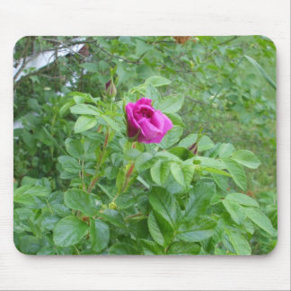 Beautiful  Rose Mouse Pad
