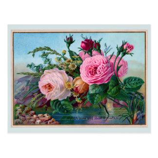 Beautiful Roses Along the Water Greeting Postcard