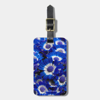 Beautiful Royal Blue Cineraria Flowers Luggage Tag