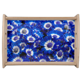 Beautiful Royal Blue Cineraria Flowers Serving Tray