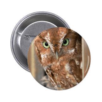 Beautiful Screech Owl Add Text Customize Pinback Buttons