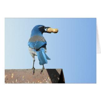 Beautiful Scrub Jay Bird Greeting Card