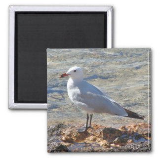 Beautiful Seagull at the Sea - Magnet