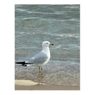 beautiful seagull on the seashore postcard