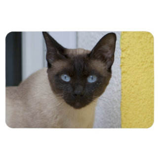 Beautiful Seal Point Siamese Cat Rectangular Magnets