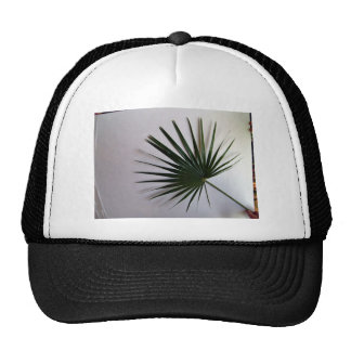 Beautiful shot of a fan palm leaf against white ba mesh hat