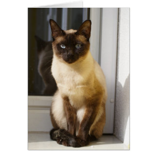 Beautiful Siamese Cat Card