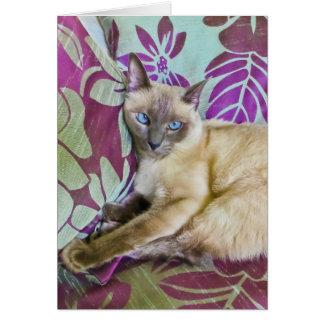 Beautiful Siamese Cat Watching the Camera Cards