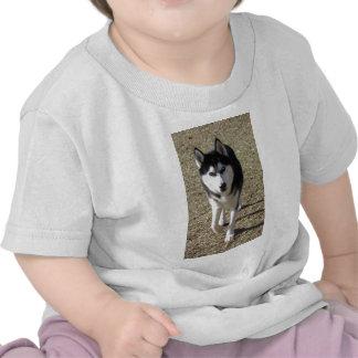 Beautiful Siberian Husky! T Shirts