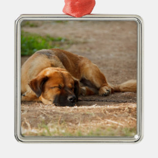 Beautiful Sleeping Dog Silver-Colored Square Decoration