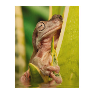 Beautiful small frog on a plant in water wood wall art