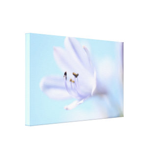 Beautiful Soft Blue Flower Stretched Canvas Print