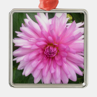 Beautiful Soft Pink Dalia Flower Design Silver-Colored Square Decoration