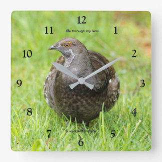 Beautiful Sooty Grouse in the Grass Square Wall Clock