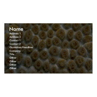 Beautiful Species of Caribbean hard coral Business Cards