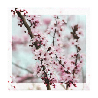 Beautiful Spring Cherry Blossom Gallery Wrapped Canvas