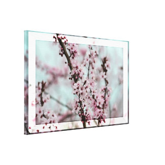 Beautiful Spring Cherry Blossom Gallery Wrap Canvas