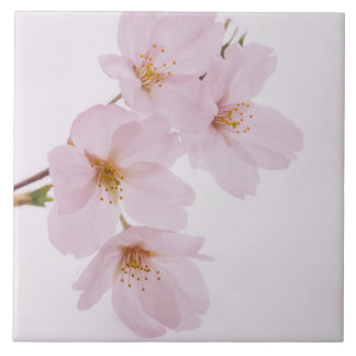Beautiful spring cherry blossoms in Tokyo Tile