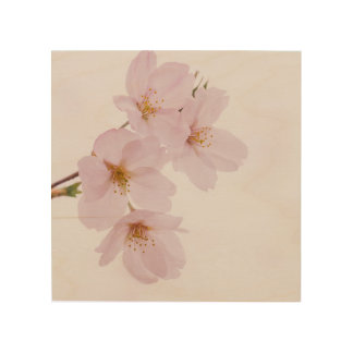 Beautiful spring cherry blossoms in Tokyo Wood Wall Art