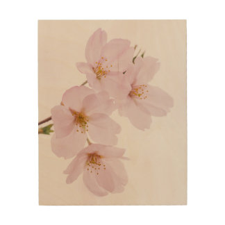 Beautiful spring cherry blossoms in Tokyo Wood Wall Decor