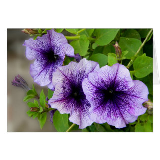 Beautiful spring flowers purple greeting card