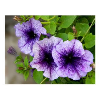 Beautiful spring flowers purple postcard