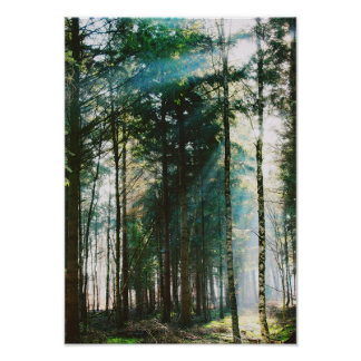 Beautiful Spring Forest Day Nature Trees Sun Poster
