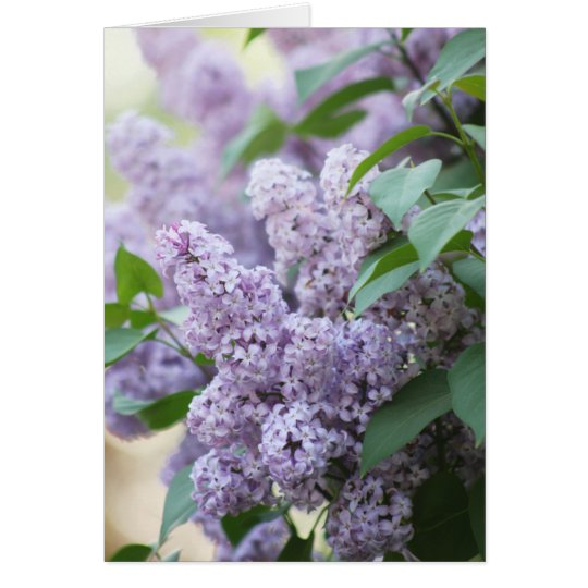 Beautiful Spring Old Fashioned Lilac Blank Card