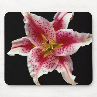 Beautiful Stargazer lily Mouse Pad