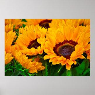 Beautiful Summertime Sunflower Painting Poster