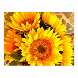 Beautiful Sunflower Bouquet Gifts Postcard