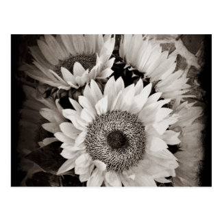 Beautiful Sunflower Bouquet Photo in Black & White Postcard
