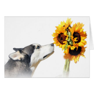 Beautiful Sunflowers and Husky Thank You Card