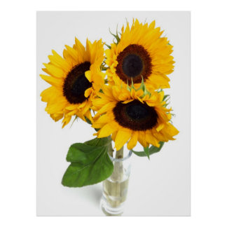 Beautiful Sunflowers Gifts Poster