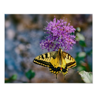 Beautiful swallowtail butterfly on flower poster