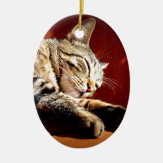 Beautiful tabby cat ceramic oval decoration