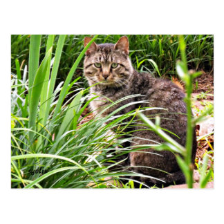Beautiful Tabby Cat in Grass Garden Photo Postcard