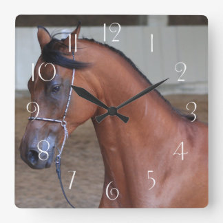 Beautiful thoroughbred arabian stallion square wall clock