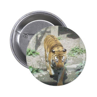 Beautiful tiger button