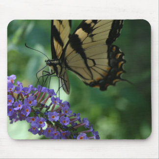 Beautiful Tiger Swallowtail Butterfly on Flower. Mouse Pad