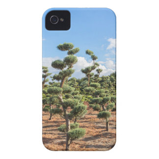 Beautiful topiary shapes in conifers iPhone 4 case