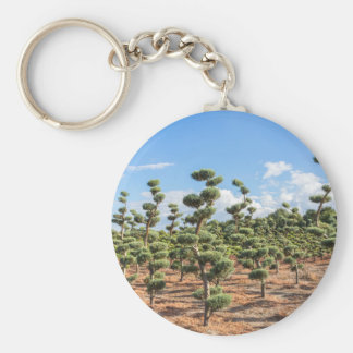Beautiful topiary shapes in conifers key ring