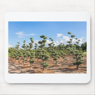 Beautiful topiary shapes in conifers mouse pad