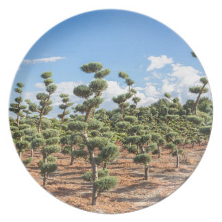 Beautiful topiary shapes in conifers plate