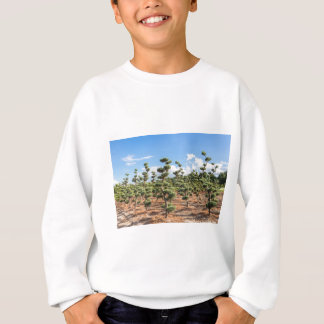 Beautiful topiary shapes in conifers sweatshirt