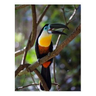 Beautiful toucan bird in a tree nature scenery postcard