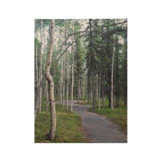 Beautiful Trail With Trees In Denali Alaska Wood Poster