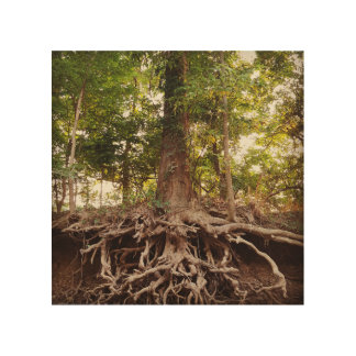 Beautiful Tree and Roots Wood Canvases
