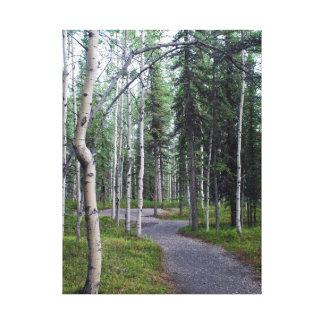 Beautiful Tree Lined Hiking Trail Alaska Canvas Print